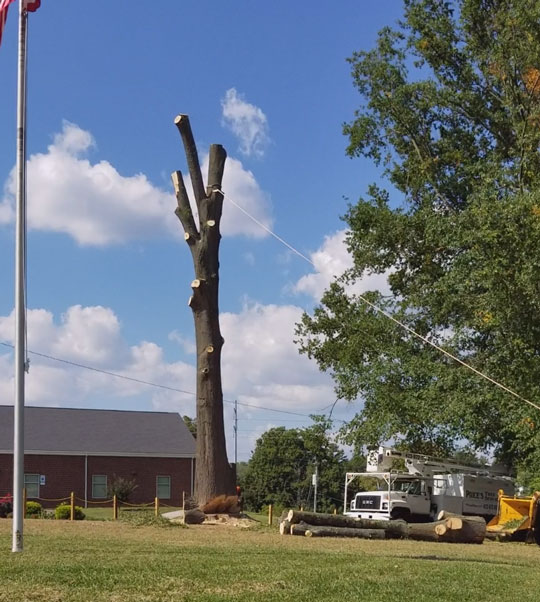 Large Tree Ready to Topple in Large Commercial Tree Services Work